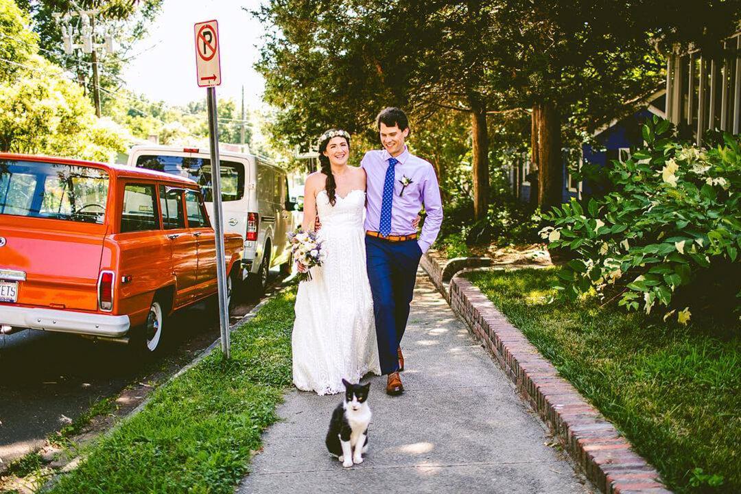 Düğün Kedileri
