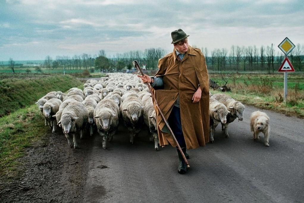 McCurry'nin Bağı: İnsanlar ve Hayvanlar