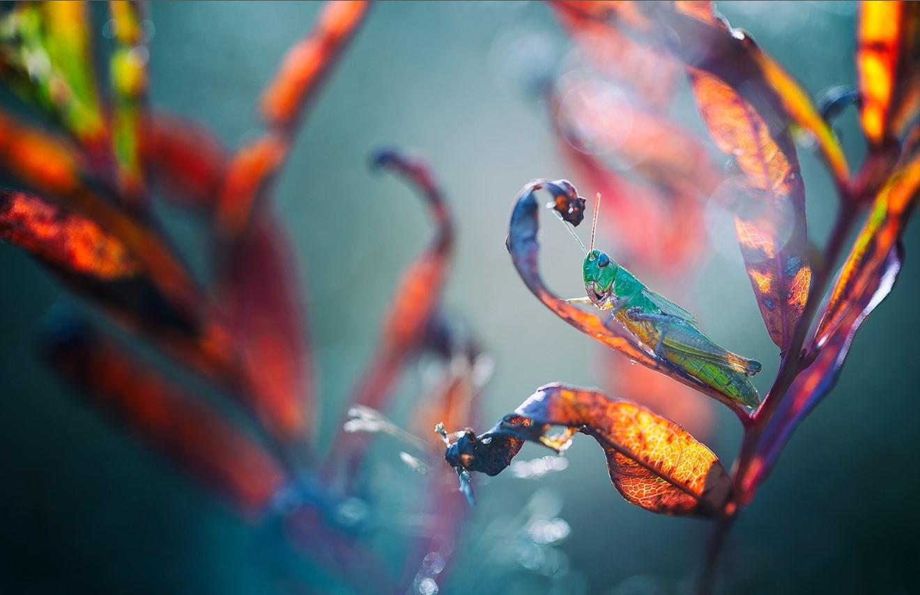 Büyüleyici Makro Fotoğraflar