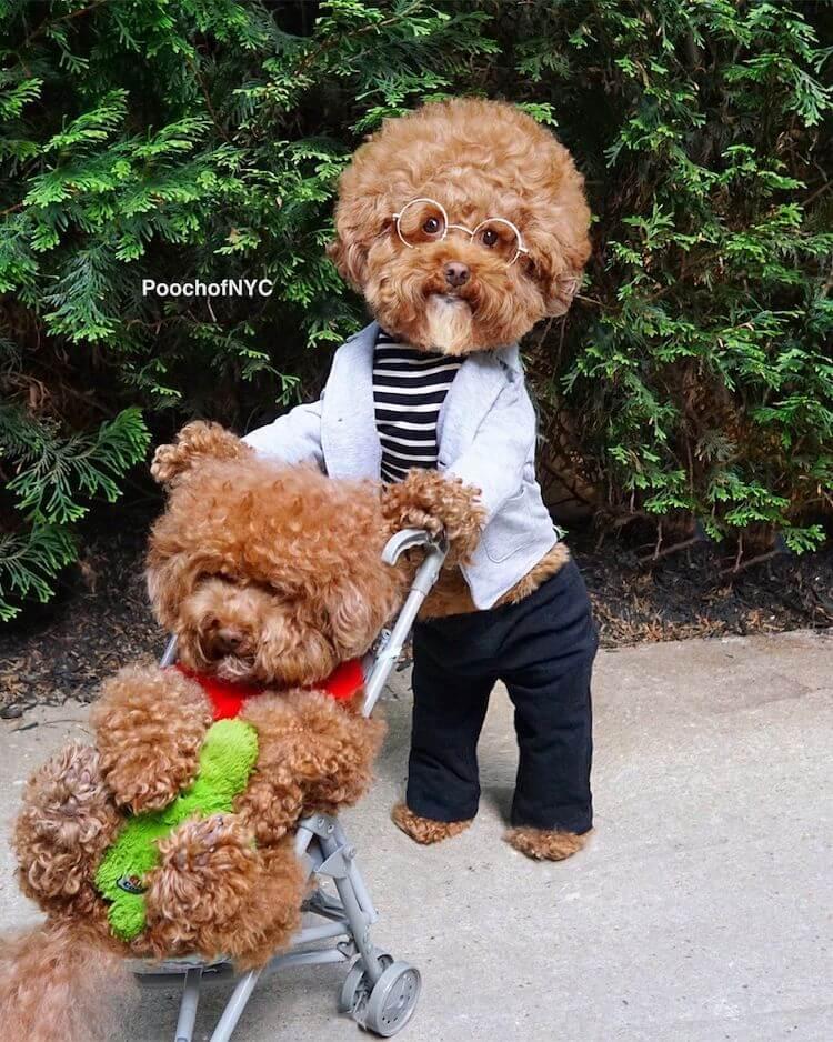 Köpeklerin Bob Ross'u