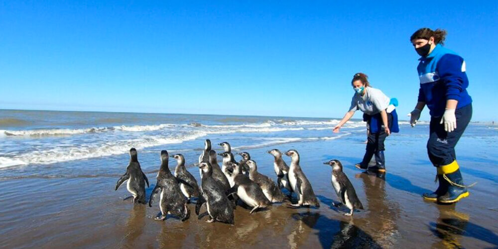 14 Penguen Okyanusa Bırakıldı