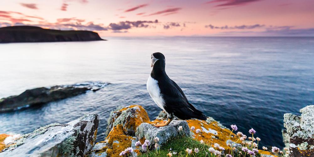 2021 Yılın Kuş Fotoğrafçısı Yarışması