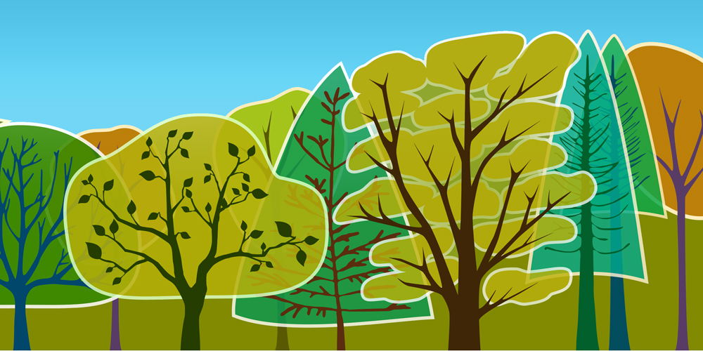 Ağaçlar Sosyal Canlılar Mı?