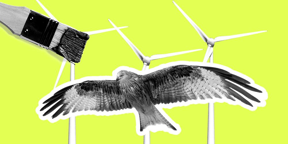 Boyalı Türbinler Kuş Ölümlerini Azalttı