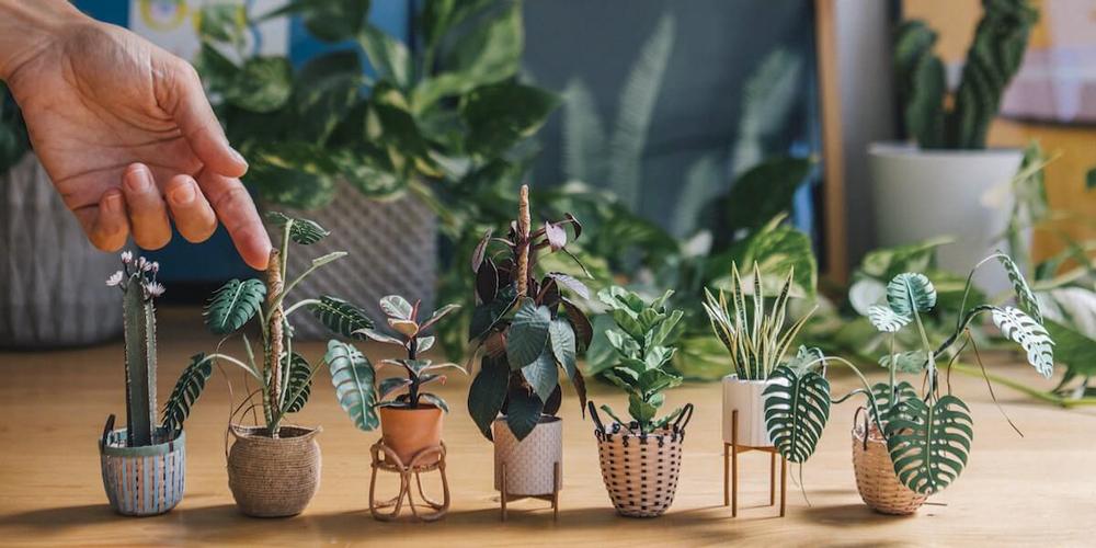 Büyümüş de Küçülmüş Kağıt Ev Bitkileri