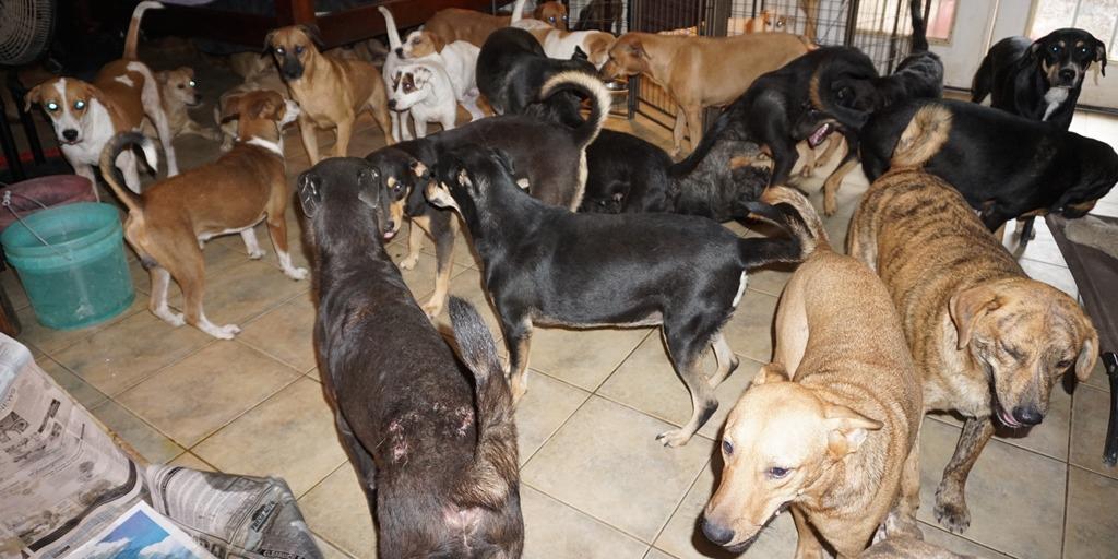 Dorian Kasırgasından Kurtarılan Köpekler