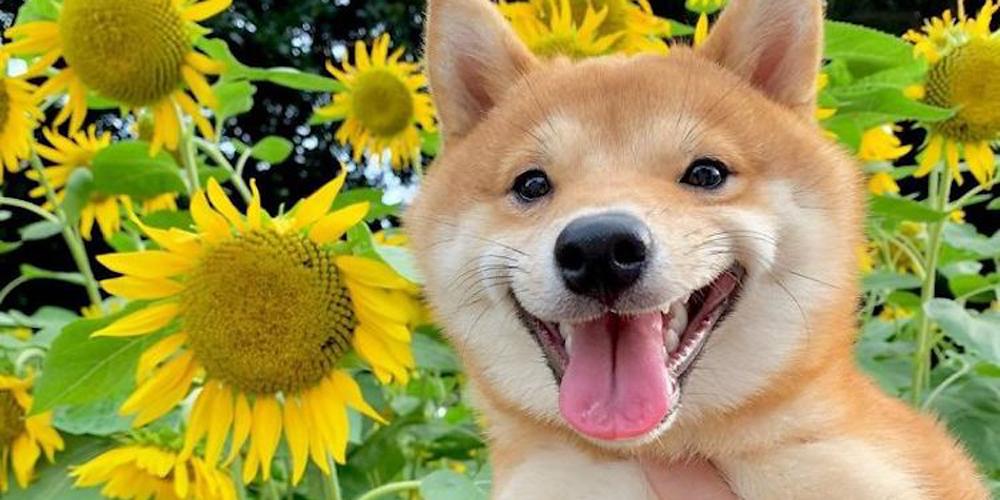 Gülümseyen Köpek Uni ile Tanışın