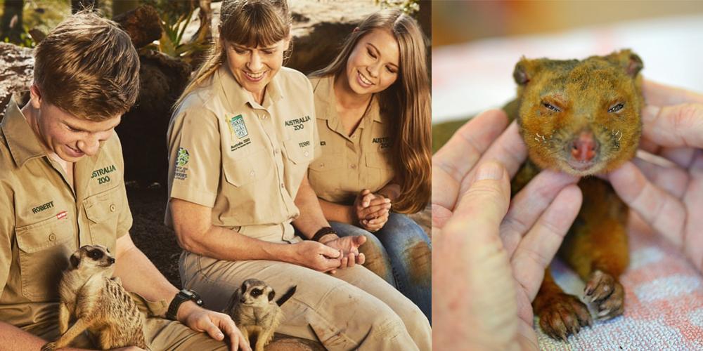 Kahraman Aile Binlerce Hayvanı Kurtardı