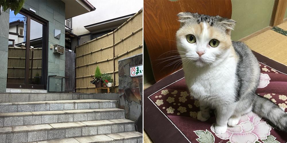 Kedi Sahiplendirmeyi Teşvik Eden Otel