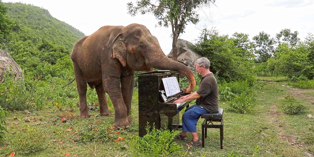 Kör Fillere Piyano Çalan Sanatçı