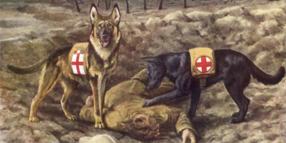 Savaşlarda Kullanılan Köpekler