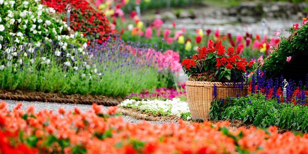 Süs Bitkileri, Özellikleri ve Bakımları